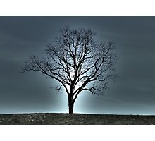 Mystery Tree Photographic Print
