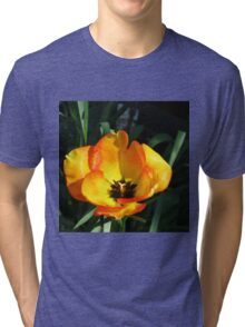 Sunlit Orange and Yellow Tulip Tri-blend T-Shirt
