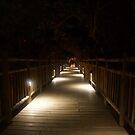 Jungle Boardwalk by Allen Lucas