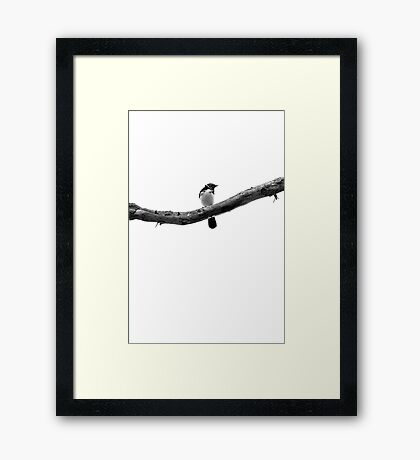 Black & White Willy Wagtail Framed Print
