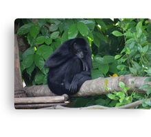 Black Monkey Canvas Print