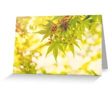 Green leaves of Japanese maple - vintage style Greeting Card