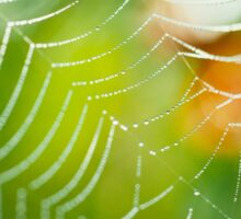 Morning in the garden  Sticker