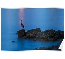 Great Blue Heron at English Bay Poster