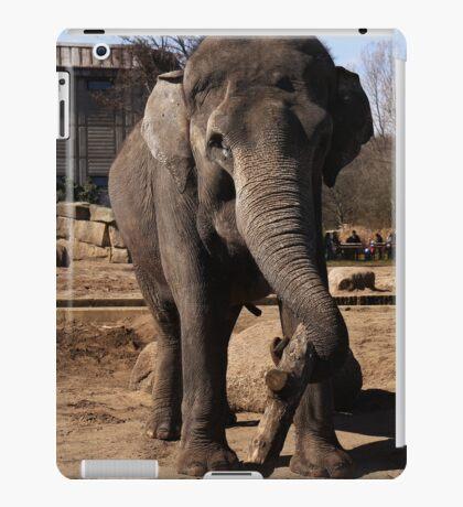 asia elephant iPad Case/Skin