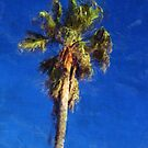 Palm Tree by jean-louis bouzou