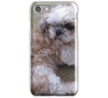 Shih tzu 3 iPhone Case/Skin