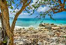 Bahamian Scenery on New Providence Island by Jeremy Lavender Photography