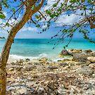 Bahamian Scenery on New Providence Island by Jeremy Lavender Photography