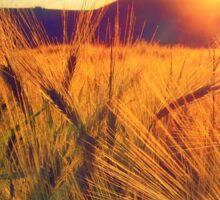 Sunset over a field Sticker