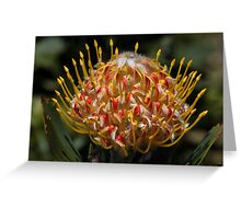Protea Flower Greeting Card