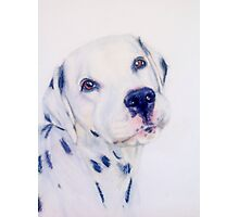 Cute dalmation dog portrait Photographic Print