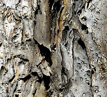 Bark abstract. Old Australian Gum Tree. Best viewed large as possible! by ronsphotos