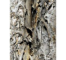 Bark abstract. Old Australian Gum Tree. Best viewed large as possible! Photographic Print