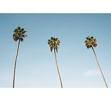 Summer palm trees Blue Photographic Print