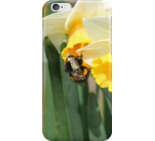 Bumblebee on Daffodils iPhone Case/Skin