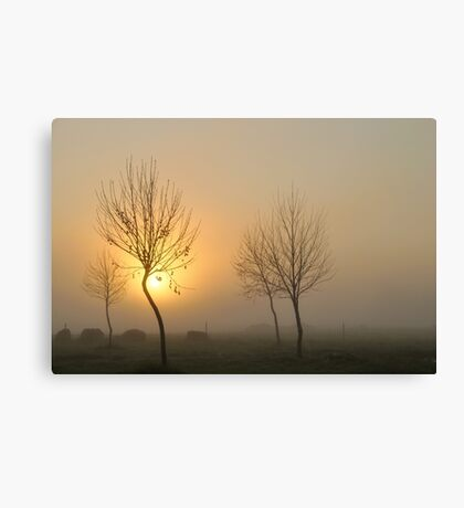 golden light of dawn #2 Canvas Print