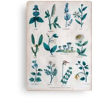 19th century lithography of common flowers and plants  Canvas Print