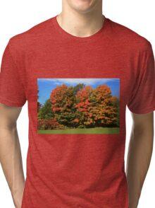 Tress  in Fall colours.  Tri-blend T-Shirt
