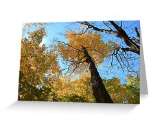 Fall coloured forest.  Greeting Card