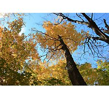 Fall coloured forest.  Photographic Print