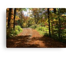 Fall mountain forest road.  Canvas Print
