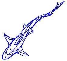 Blue shark Photographic Print