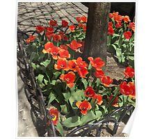Tulips Full Bloom, Spring in New York Poster