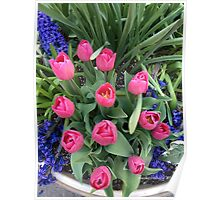 pInK Tulips, Spring in New York Poster