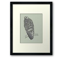 Eagle perched on its branch Framed Print