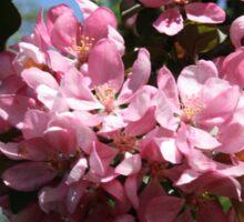 Cherry Tree Blossoms. Sticker