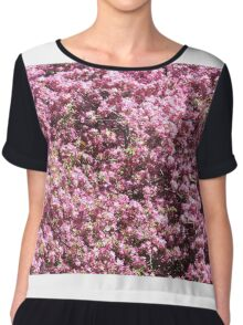 Background from Buds and Flowers of Blossoming Cherry Tree. Chiffon Top