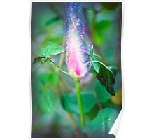 Exploding Red garden rose bud on a lush green background  Poster