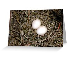 Pigeon eggs. Greeting Card