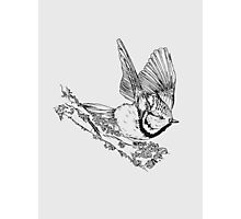 Crested tit taking flight  Photographic Print