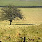 Lone Tree by Livvy Young