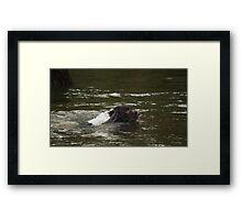 Dog Swimmer Framed Print