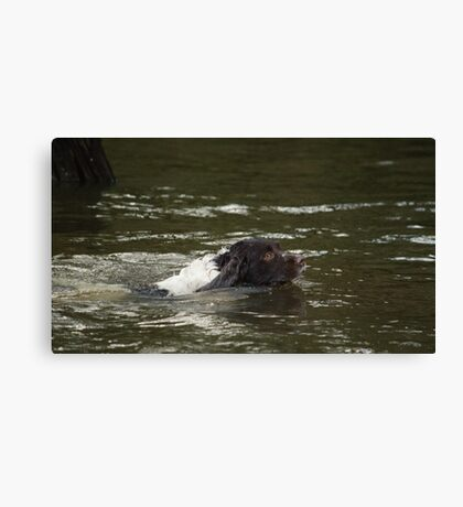 Dog Swimmer Canvas Print