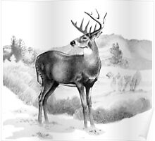 White-tail Stag Sniffing the Air Poster