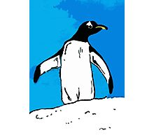 Penguin with blue sky Photographic Print