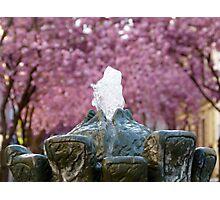 Cherry Blossoms #2 Photographic Print