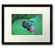 Borage flower Framed Print