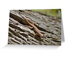 A Lizard on a Log in the Forest on a Spring Day in Georgia Greeting Card