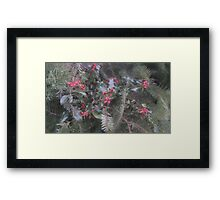 Holly and fir Framed Print