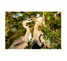 Great Blue Herons Adult and Young Art Print