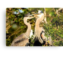 Great Blue Herons Adult and Young Metal Print