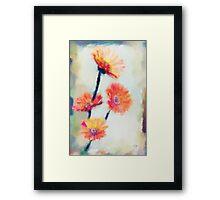 Colorful Orange Zinnias Framed Print
