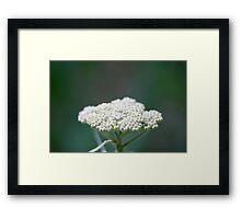 Dreamy Flower 2 Framed Print