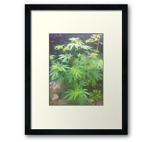 weed plant Framed Print