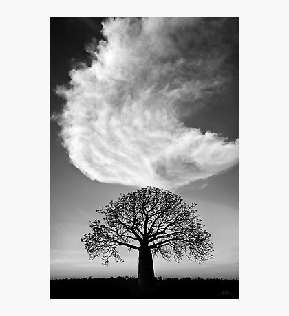 Sky Tree Photographic Print